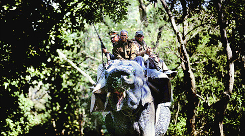 Two elephants have been brought in from Dudhwa National Park for the hunt for the 'Mysterious Queen'. (Photo: IE)
