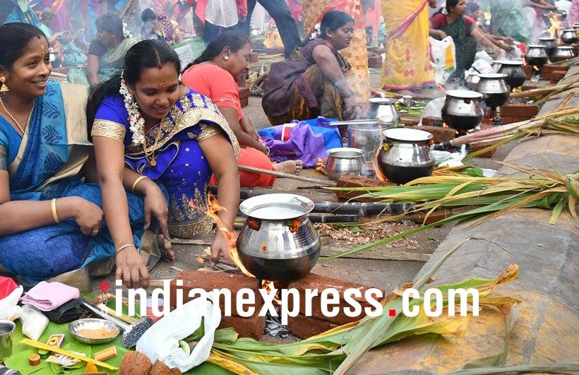 makar sankranti, pongal, makar sankranti pictures, pongal photos, makar sankranti 2018 photos, pongal photos, indian express, indian express news