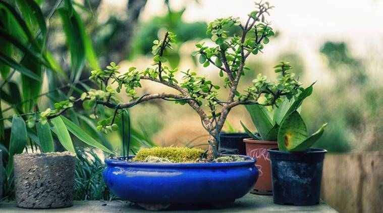 holi gifts, what to gift on holi, holi, holi party, holi celebrations, green plants, orange sweets, gold coin, holi colours, indian express, indian express news